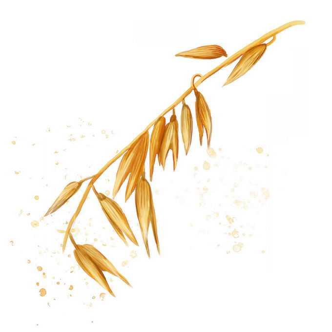 秋天颗粒饱满的燕麦穗粮食大丰收5119964免抠图片素材
