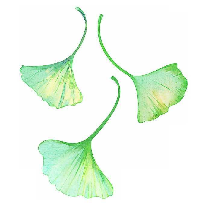 3款墨绿色的银杏叶水彩插画7390601免抠图片素材