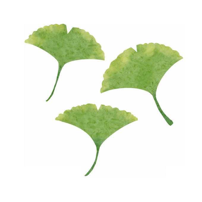 3款绿色的银杏树叶4600198免抠图片素材