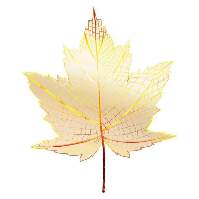 金色的枫叶半透明效果树叶1708364免抠图片素材