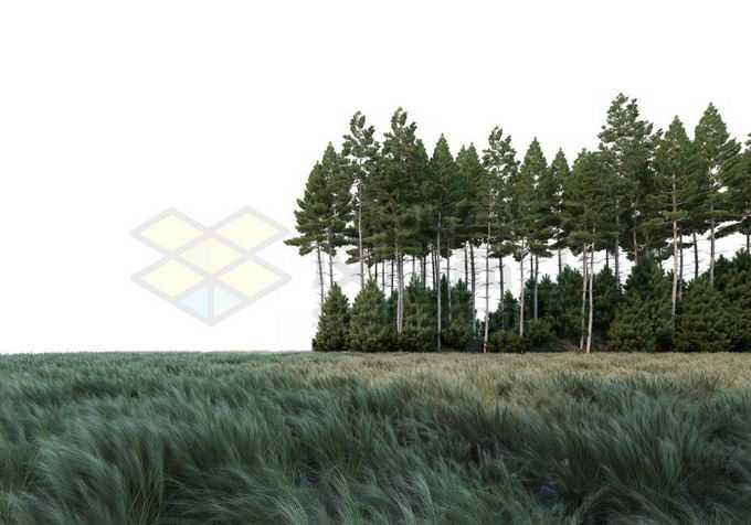 大风吹低大草原上的青草和远处的树林灌木丛自然景观8280820PSD免抠图片素材