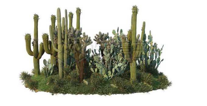 仙人掌仙人棒组成的干旱地区的灌木丛9135137PSD免抠图片素材