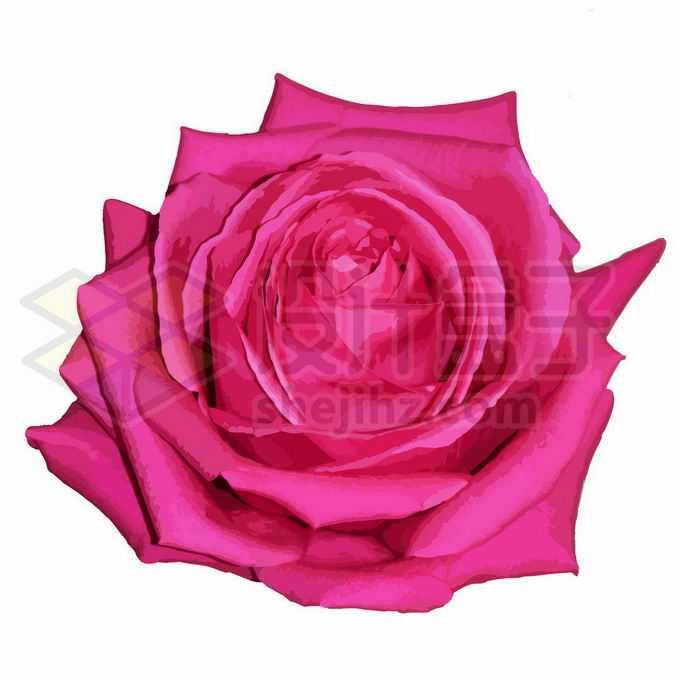 一朵盛开的玫红色鲜花玫瑰花大红花3238074向量图片素材