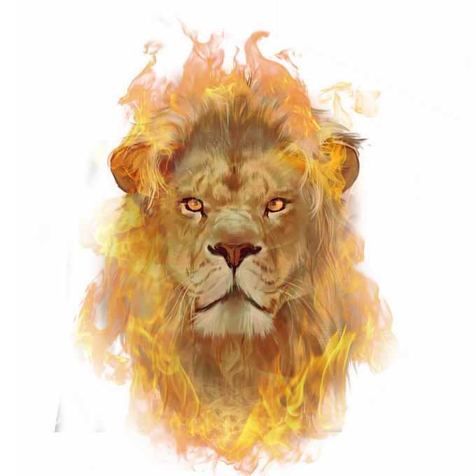燃烧火焰的狮子头抽象插画4710075图片素材