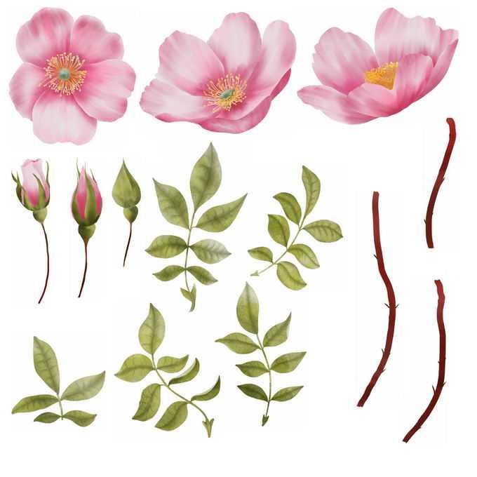 桃花花苞桃树叶和桃树枝7247140图片素材