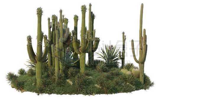 干旱草原上的仙人棒灌木丛自然景观3165175PSD免抠图片素材