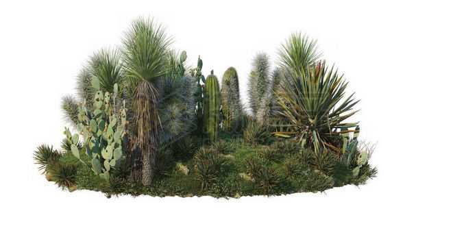 干旱草原上的仙人掌仙人棒剑麻灌木丛1782557PSD免抠图片素材