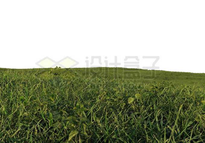 一望无际的青青大草原9762966PSD免抠图片素材