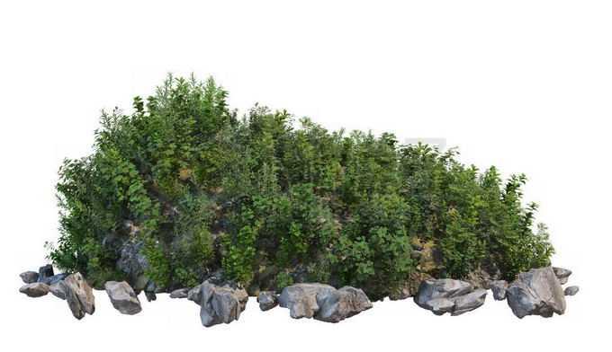 乱石堆上的野草丛9300897PSD免抠图片素材