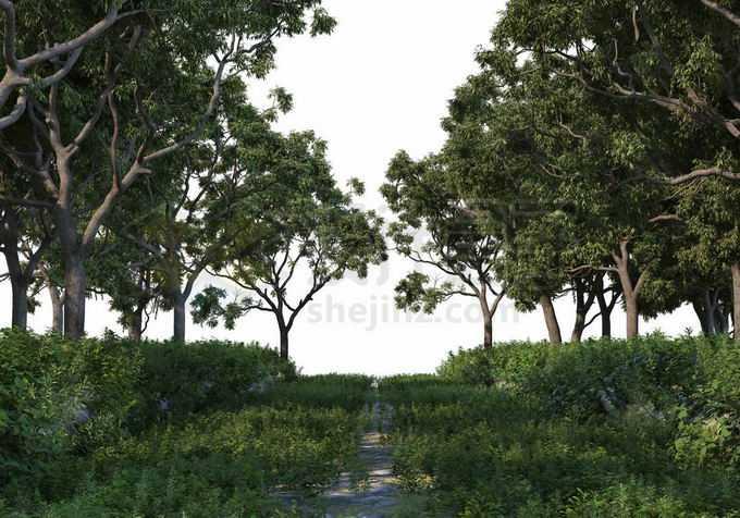 夏天树林中间杂草丛生的小路两旁都是大树9045972PSD免抠图片素材