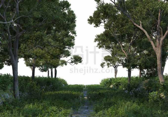 夏天树林中间的绿草地两边都是大树5512296PSD免抠图片素材