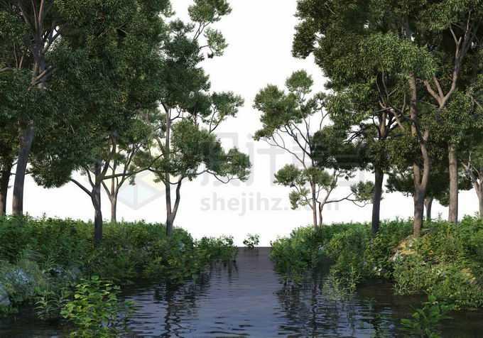 夏天树林中间平静的河水两岸高大树木1587154PSD免抠图片素材