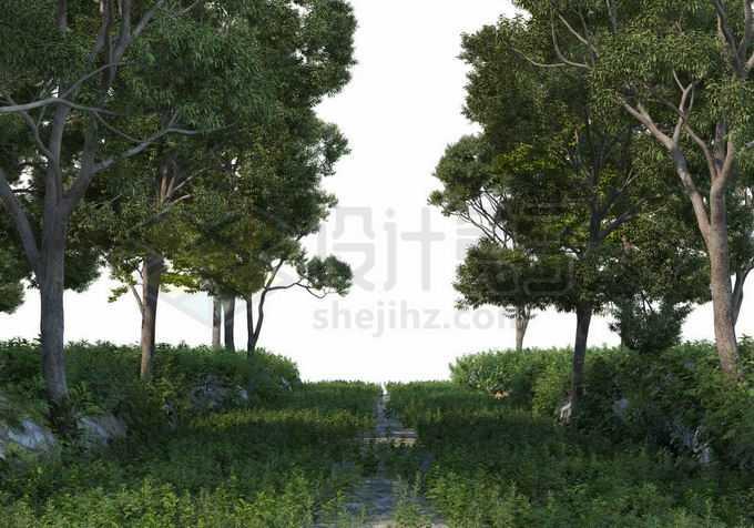夏天树林中的小路长满杂草两边都是大树9959864PSD免抠图片素材