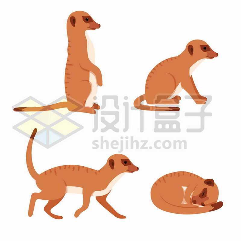 4只可爱的狐獴非洲野生动物獴科动物8337799矢量图片免费下载