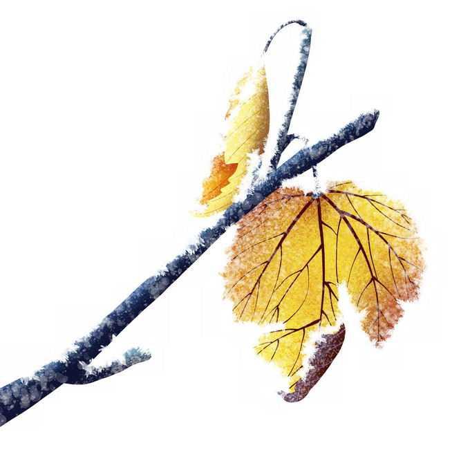 深秋霜降的树枝和黄色树叶4709684png免抠图片素材