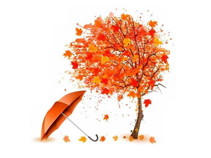 深秋变红的枫树和雨伞落叶1436024png免抠图片素材