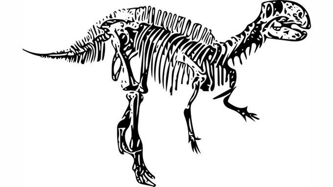 黑色霸王龙骨架化石手绘图案2876558png免抠图片素材