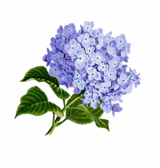 枝头上的紫色花卉鲜花花朵6169779png免抠图片素材