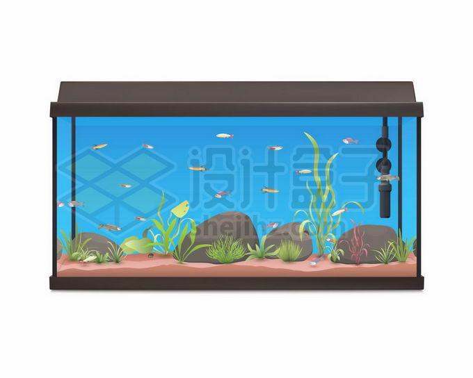 热带鱼缸中的蓝色的水7898372矢量图片免抠素材免费下载