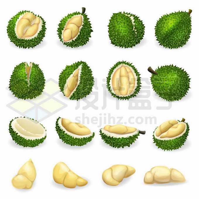 各种榴莲美味水果和榴莲肉8298274矢量图片免抠素材免费下载