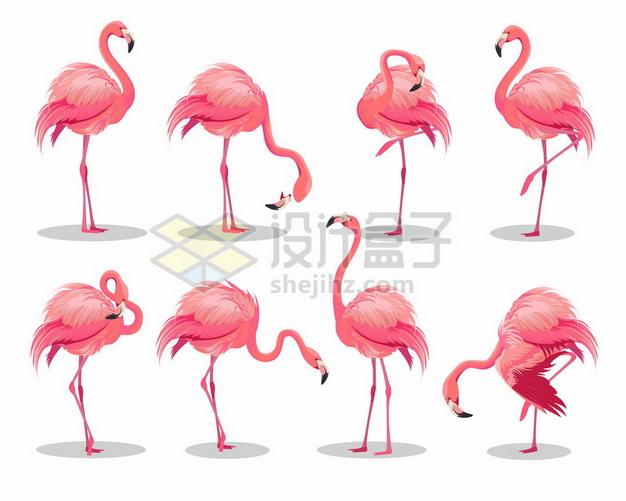 8款粉红色的火烈鸟野生动物园9353051矢量图片免抠素材