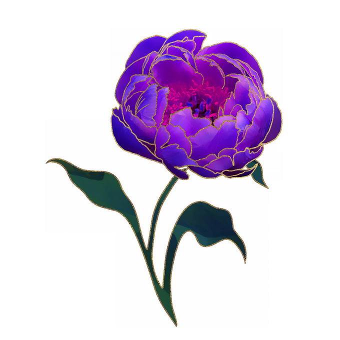 一朵紫色的牡丹花鲜花6125428免抠图片素材
