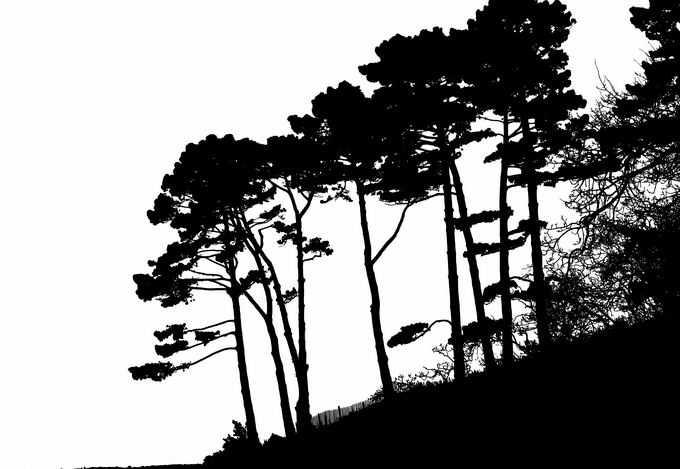 山坡上的松树森林剪影1893957png免抠图片素材