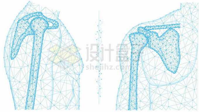 肩关节正面和侧面人体骨骼蓝色线条多边形图案7310124矢量图片免抠素材