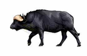 一只浑身黑色的水牛老牛3235008矢量图片免抠素材免费下载