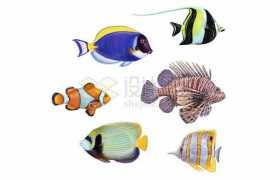 小丑鱼蓝唐王鱼角镰鱼狮子鱼等各种海洋鱼类5110307矢量图片免抠素材
