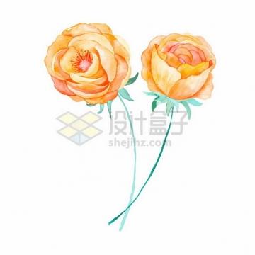 两朵黄玫瑰花朵花卉鲜花水彩插画413681png图片素材