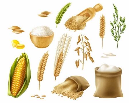 小麦麦穗颗粒玉米棒子面粉谷物等粮食主食png图片免抠矢量素材