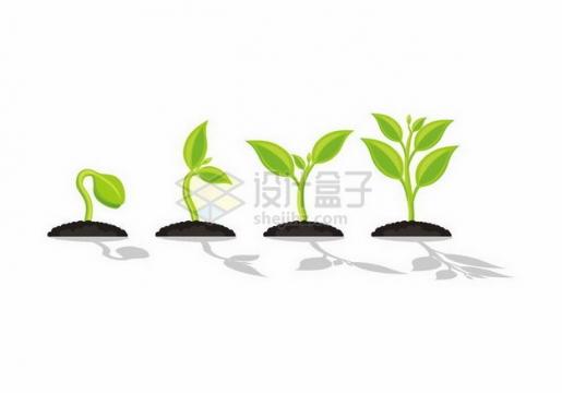 植物种子发芽的四个阶段png图片免抠矢量素材