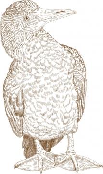 手绘插图风格鸬鹚野生动物图片免抠矢量图素材