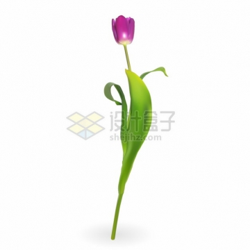 带有绿叶的玫红色郁金香花朵鲜花花卉png图片素材