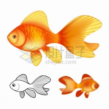 金黄色的金鱼和素描鱼儿png图片素材