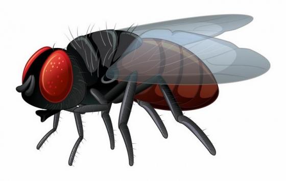 手绘风格的苍蝇害虫png图片免抠矢量素材
