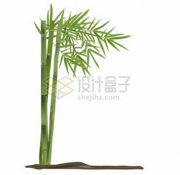 长在泥土地上碧绿的竹子png图片免抠矢量素材