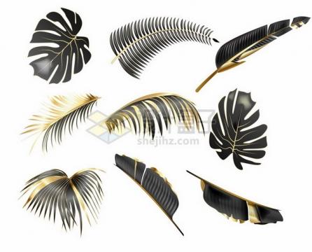 黑金色的热带树木的树叶101983png图片素材
