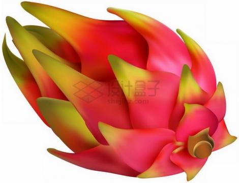 手绘完整的海南火龙果png图片素材