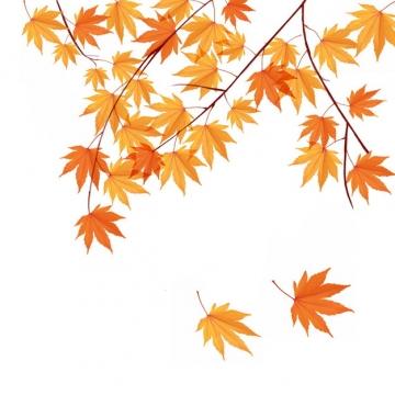 秋天枝头上飘落的枫叶330286png图片素材