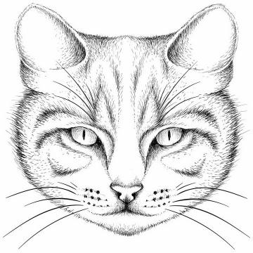 黑色手绘素描风格猫咪猫头png图片免抠矢量素材