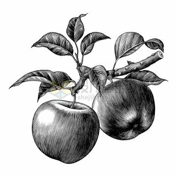树上的苹果美味水果手绘素描插画png图片免抠矢量素材