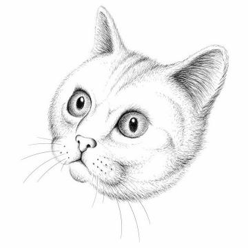 黑色手绘素描风格可爱猫咪猫头png图片免抠矢量素材