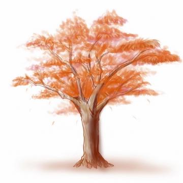 秋天树叶变红的大树水彩插画253485png图片免抠素材