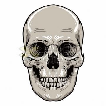 灰色的头盖骨骷髅头697525png矢量图片素材