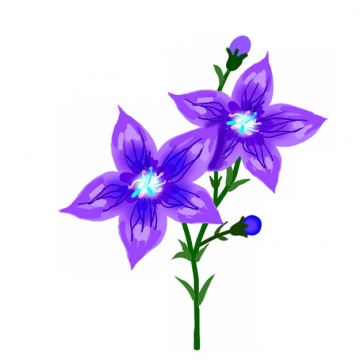 盛开的桔梗花紫色花朵手绘插画642779png免抠图片素材