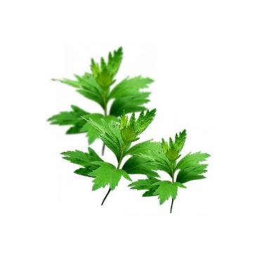 艾蒿叶子绿叶828086png图片素材