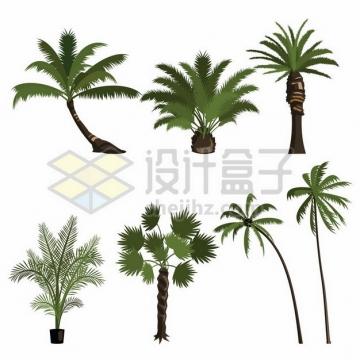 椰子树铁树棕榈树蒲葵树等热带树木120381png图片素材