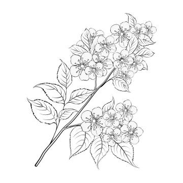 线描风格枝头上的梨花花卉图片免抠矢量图素材